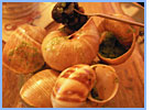 Garlic snails